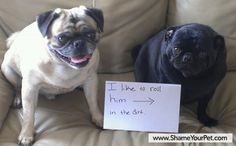 Shame Your Pet | Dog Shaming • Cat Shaming | Shame Your Pet==doesn't look sorry!!!