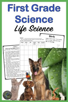 Grade Science: NGSS and From Molecules to Organisms and Heredity - Orlando Verring 1st Grade Science, Primary Science, Mad Science, Stem Science, Life Science, First Grade, Grade 1, Third Grade, Science Lesson Plans
