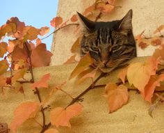 Autumn Meditation (via Sophie Valenti)