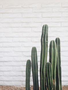 desert life - cactus /plant love