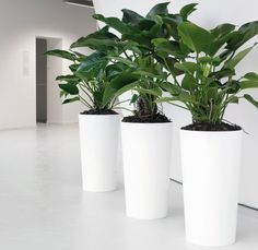 office planter. Custom Planter Boxes For Lobby Of Corporate Office Made By Feruxe | Retail Displays Pinterest Offices, Lobbies And Planters T