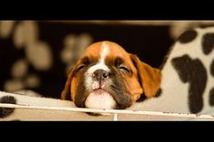 George's first camera experience by Danny Beattie, via Flickr