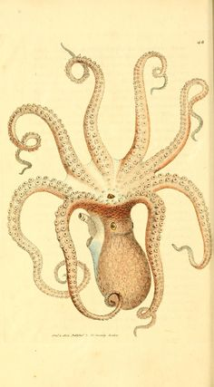 v. 1-2 (1806) - The British miscellany, or, Coloured figures of new, rare, or little known animal subjects : - Biodiversity Heritage Library