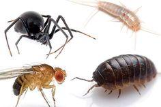 """Har du mange sølvfisk, bænkebidere, bananfluer eller edderkopper i dit hjem? Så har du besøg af en """"indikatorart"""". Det er muligvis et symptom på, at der er noget ravruskende galt i din bolig. Læs her om, hvad du kan gøre mod de små kryb og for din..."""