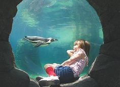 Woodland Park Zoo | Seattle, WA (9:30 - 19:00) Adults: $19.95