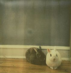 {Franny and Seymour} polaroid by xoazuree - so much bunny awesome