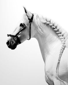 What a beautiful horse. Love the braid!