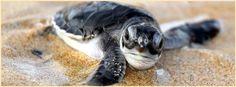 Baby sea turtle~ cover photo