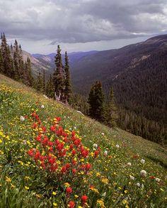 Forth of July trail, Colorado, Rocky Mountain Fine Art