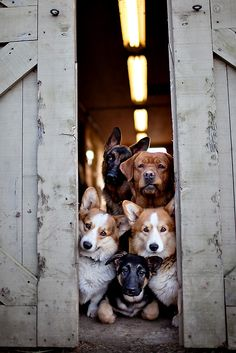 Pets Gallery » Philadelphia Pet Photographer | April Ziegler Photography