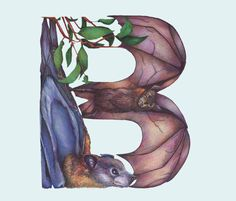 B • Animals in Alphabets by Casey Girard
