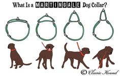 Questions Regarding Martingale or Metal Buckle Collars, Collar Sizing, Custom Orders, and Safety Diy Dog Collar, Dog Collars, Martingale Dog Collar, Aggressive Dog, Cat Behavior, Whippet, Dog Supplies, Dog Accessories, My Animal