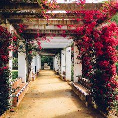 #Primavera en el #Parque de María Luisa, #Sevilla - #FelizViernes.