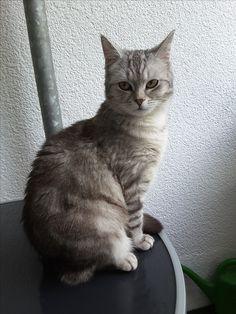 Sissy Katze | Pawshake