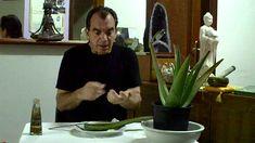 Aloe vera para comer, y aplicar en el cuerpo