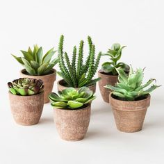 singsweetly: (via Green Thumb Succulents - Set of 6)