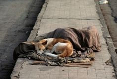 ..faithful friend...even on the streets