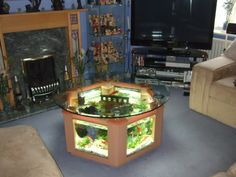 Coffee table fish tank!!! super adorable!