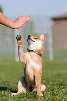 dog obedience training tips Best Dog Breeds, Best Dogs, Dog Hacks, Family Dogs, Dog Behavior, Dog Training Tips, Dog Friends, Dogs And Puppies, Dog Cat