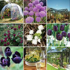 Våra mest gillade bilderna i år! Kul att växthusen som är nytt för i år varit uppskattade. Missa inte år 2018's nya produkter. Några finns redan i webshoppen!  #2017bestnine #åretsbästa #wexthuset #växthus #sunbubble #tulpaner #blodört #rosor #fläderblomssaft #växthusliv #trädgård #minodlingslycka #minträdgård #gardeninspo #trädgårdsinspiration #odlingstips