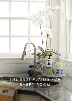 The Best Plant for Every Room in Your Home. From your kitchen to your bathroom to your bedroom. Here are the best plants for every room in your house.