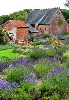 """Take that, deer! Enjoy the lavender garden! Evil laugh... Sorry, but the deer have wrought havoc this week, so the pictured garden is twice as beautiful and appealing today as I imagine the """"venison's"""" confounded looks if I switch to primarily lavender."""