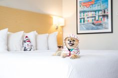 Did you know Savannah's Thunderbird Inn is pet-friendly? Savannah Hotels, Visit Savannah, Savannah Chat, Thunderbird Inn, Pet Friendly Hotels, Dog Runs, Fluffy Animals, Pet Beds, Four Legged