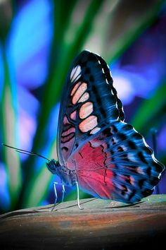 Butterfly / COLORS!!!