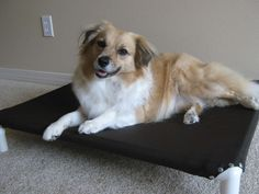 $10 DIY dog bed with instructions--saw these at the shelter and thought what a great idea! So making these!