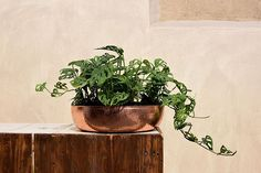 """""""Empecé con una planta que compré en el súper el primer día que me mudé de ciudad. Luego una visita al vivero y una planta que mi amigo no se podía llevar con su mudanza. Más plantas del súper semillas plantas chiquitas que se mudaban de maceta en maceta. Ahora mis plantas son el tercer roommate de mi departamento. Leía por ahí que a los millennials nos gusta comprar plantas porque tenemos la necesidad de sentir a la naturaleza cerca de nosotros. Nos encanta estar en casa que nuestros…"""