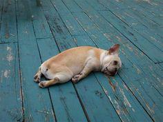 Állatok, amelyeknek nagyon hétfő van | NLCafé