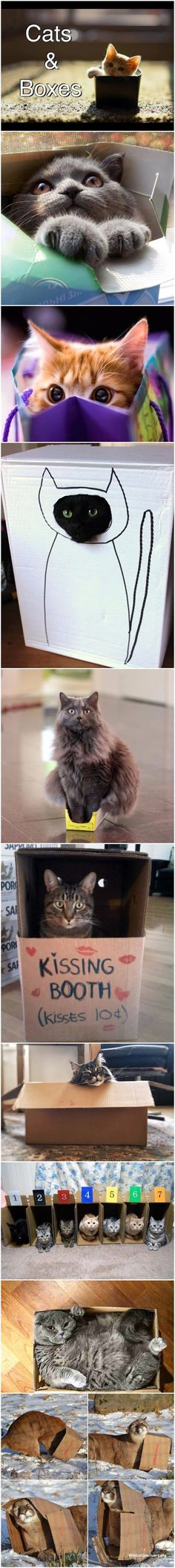 Funny cats in boxes collection