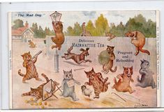 Louis Wain post advertising postcard, Mazawattee Tea