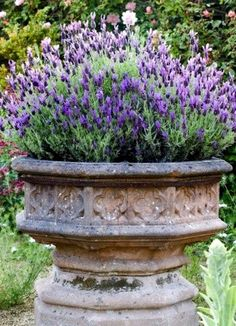 Decorative Urns For Plants Delectable Antique Iron Urn Urns Are Classic And Will Add Such A Beautiful Inspiration