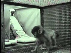 Harlow's Studies on Dependency in Monkeys Harry Harlow shows that infant rhesus monkeys appear to form an affectional bond with soft, cloth surrogate mothers that offered no food but not with wire surrogate mothers that provided a food source but are less pleasant to touch.