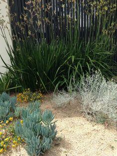 The best garden designer in Australia? Coastal Gardens, Beach Gardens, Outdoor Gardens, Australian Garden Design, Australian Native Garden, Australian Plants, Bush Garden, Dry Garden, Fence Garden