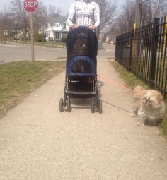 Paws getting a ride in his new stroller