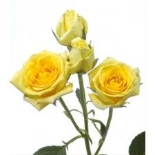 yellow spray Rose Mix with Cream in Bridesmaids' Crowns