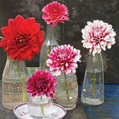 flower-hub