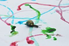 Dip snails in food coloring / water, have a race, and create a work of art! Keep your eye on them throughout the day. At the end of the day, you can see all the patterns they created on the paper! Also, who's snail will win the race? What snail glided the most color on the paper?!