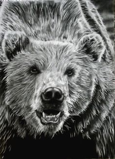 Grizzly Drawing by ~jmoneygetdown