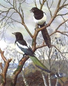 C F Tunnicliffe - Seven Magpies