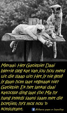 Afrikaanse Quotes, Goeie More, South Africa, Funny Quotes, Jokes, Humor, Gallery, Beautiful, Funny Phrases