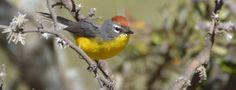 Este fin de semana en Córdoba se realizarán las Primeras Jornadas de Observación de Aves de Villa La Bolsa