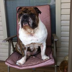 I can sit in a chair like a people!