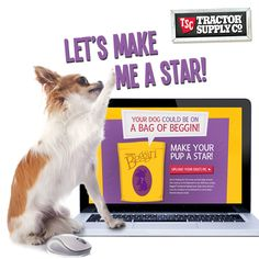 This is so fun :) Your dog's face could be featured on a national bag of Beggin' treats! So cool! Click through to enter ...
