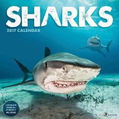 Sharks Calendar 2017
