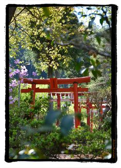 八王子 今熊神社   kurosuke ishigaki