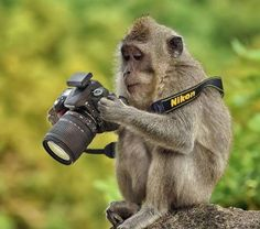 money with camera Funny Monkey Pictures, Animal Pictures, Animals Photos, Animals And Pets, Funny Animals, Cute Animals, Wild Animals, Photos Singe, Photo Animaliere