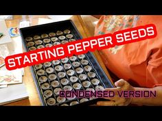 Starting Pepper Seeds Condensed Version - YouTube